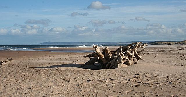 Driftwood on the East Beach