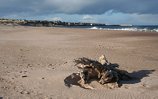 East Beach with Driftwood