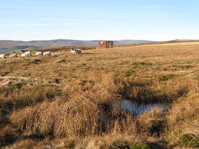 Damp ground (and old railway goods van) below Windy Hill