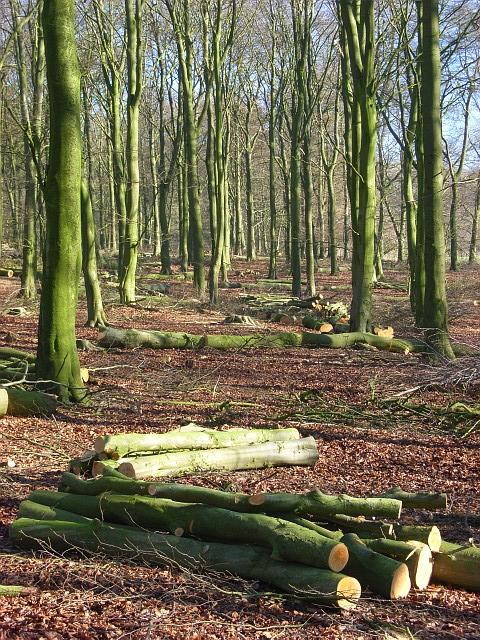 Woodland on Lockinge Down