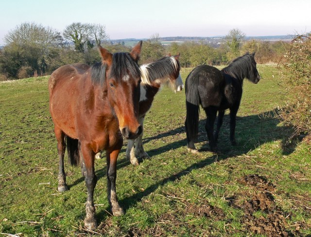 Horses near Desford in Leicestershire