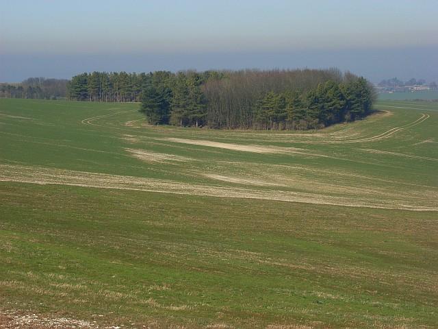 Farmland and copse on the downs, Lockinge