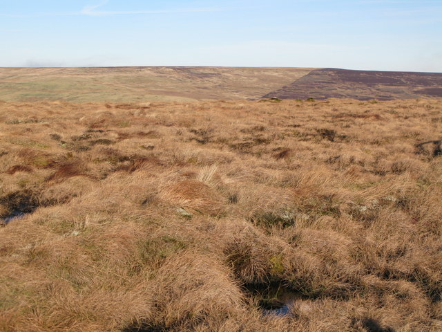 Spongy ground on top of Windy Hill