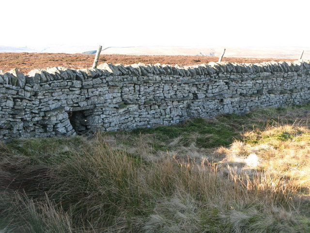 Sheephole in drystone wall on Windy Hill