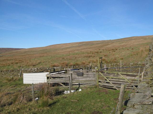 Sheep dip, Whitley Hills