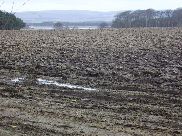 Tyninghame ploughed field