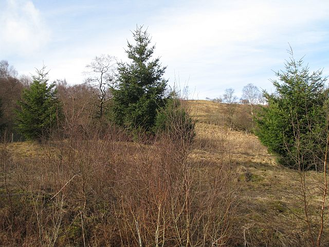 Woodland on Hill of Cally