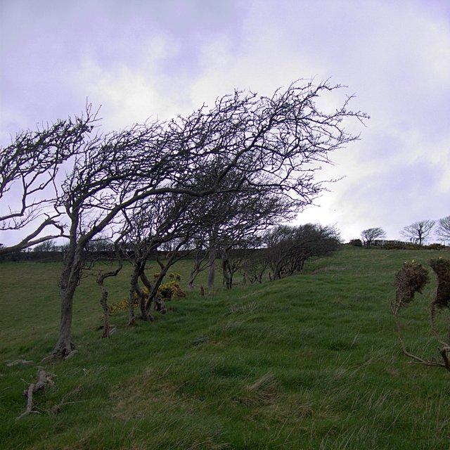 Tree-lined field boundary near Penlan farm
