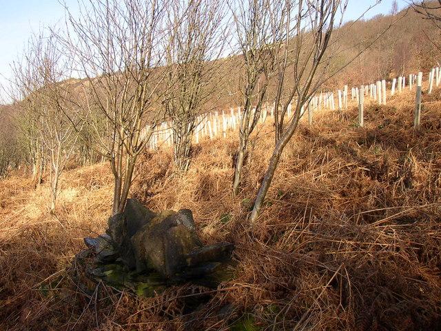 Remains of wall and plantation, Tong Royd, Elland