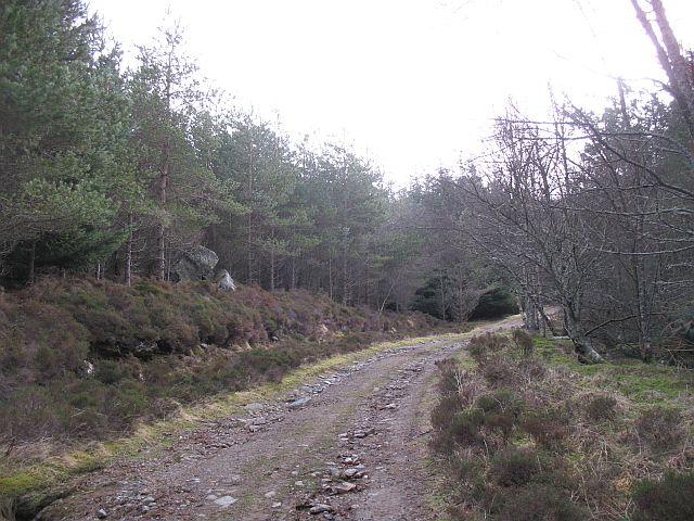 Woodland below Meall Mòr