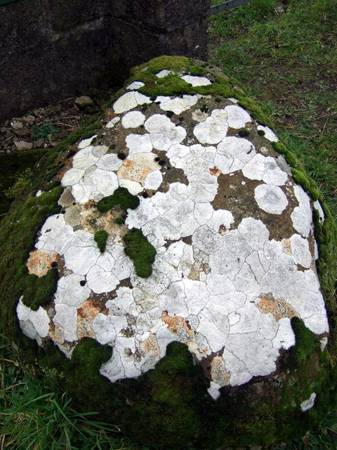 Lichened stone