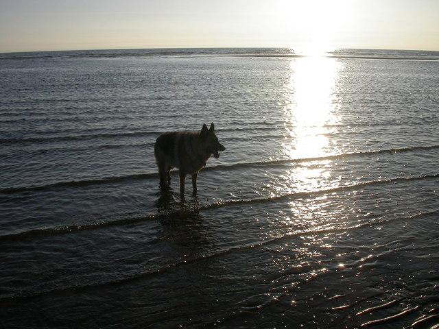 Blackpool Beach near Pleasure Beach, Low water