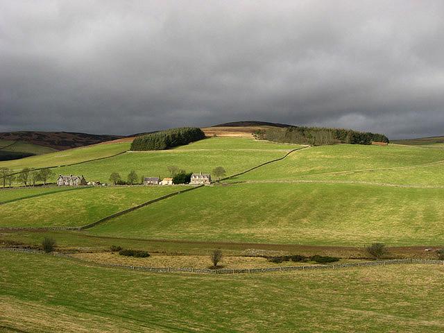Grazing fields at Blackhaugh