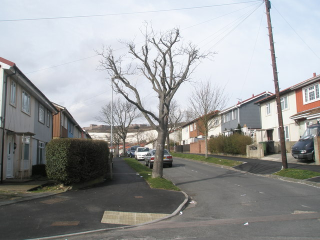 Tree in Winchcombe Road.