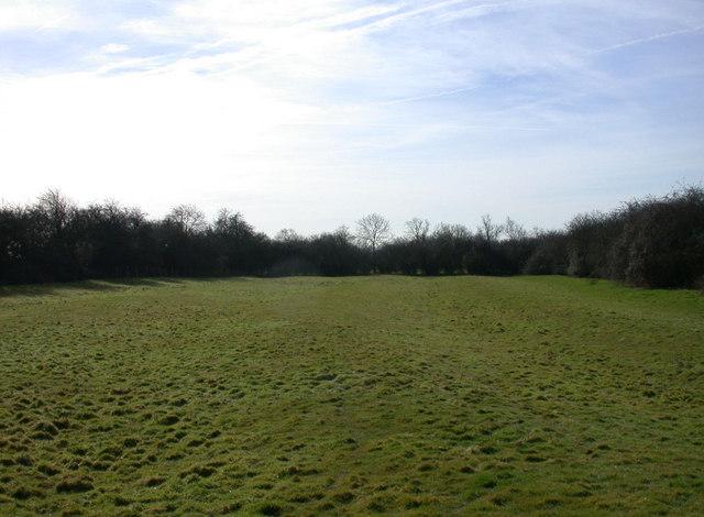 Ridge & Furrow agriculture, Coton