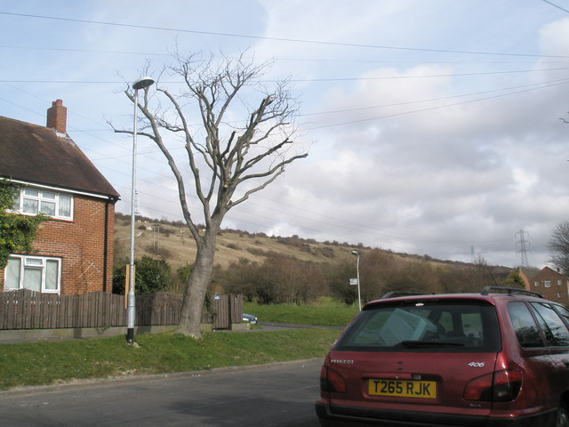 Tree by Lime Grove