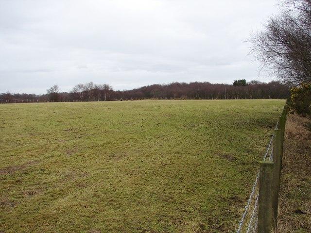 Fields Near White Moss