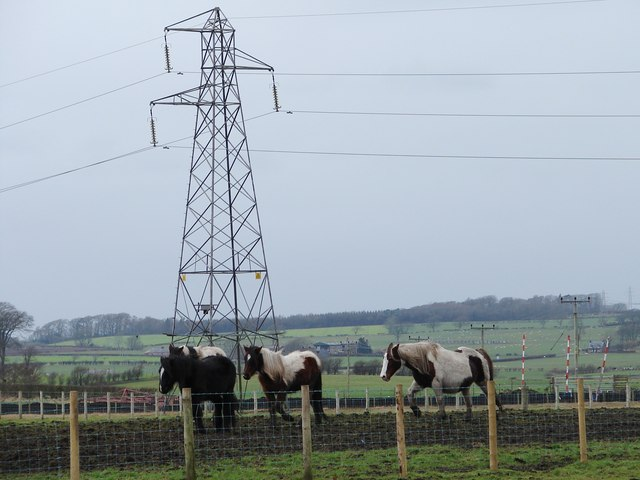 Four Ponies and a Pylon