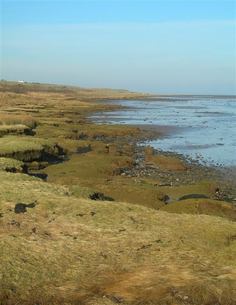 Saltings At Loch Gruinart