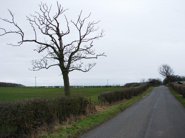 Tree Near Roadside