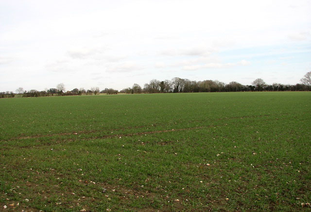 Cereal field beside Hingham Road
