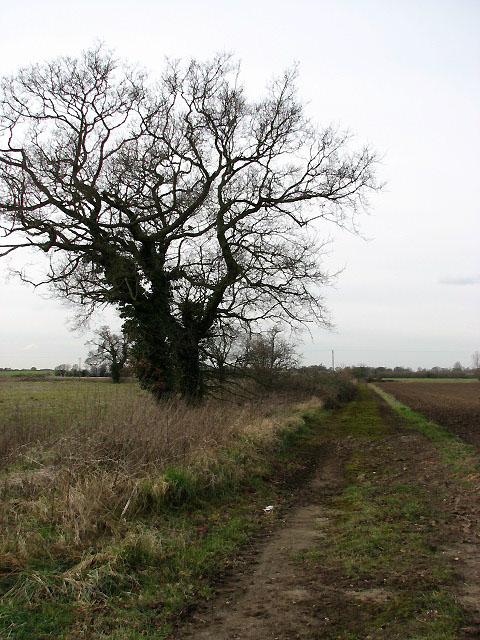 Farm track leading east