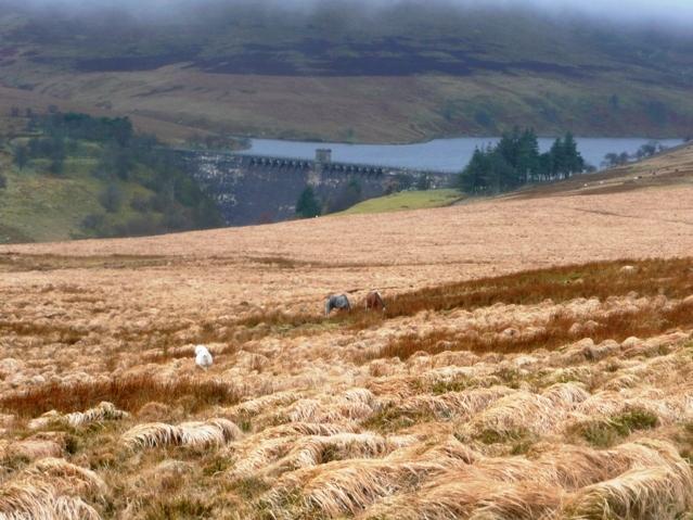 Towards Gwryne Fawr reservoir
