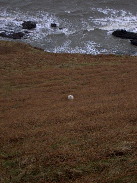 Sheep without vertigo