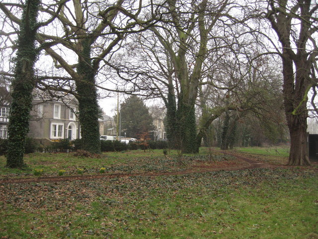Woodland along Shaftesbury Road