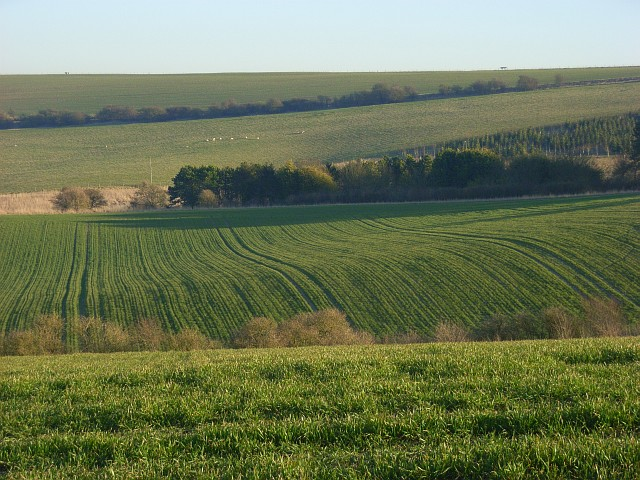 Farmland on the downs above Sparsholt