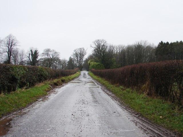 Puddle Ahead