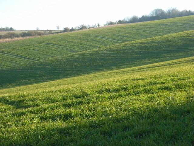 Farmland on the downs above Sparsholt