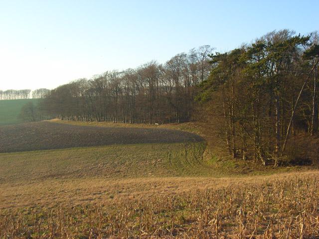 Woodland on Eastmanton Down