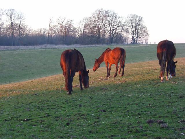 Horse on downland, Sparsholt
