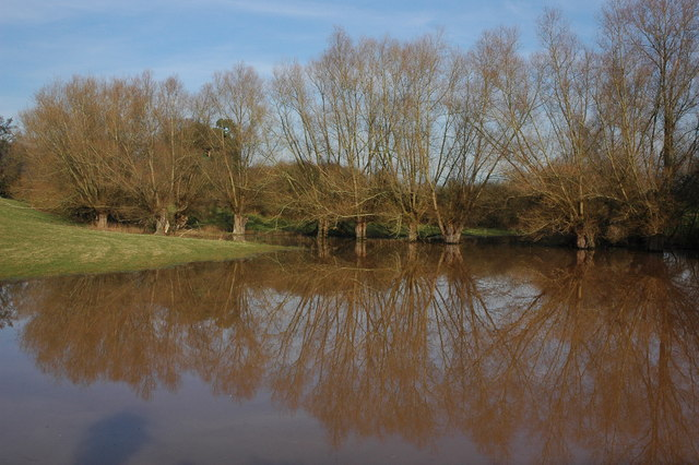 Willow trees reflected in floodwater, Whitbourne