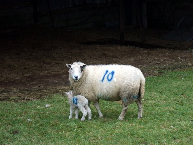 New mother No.10