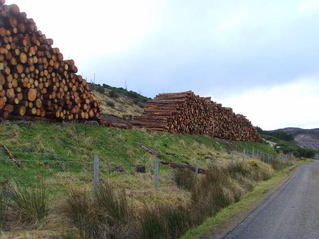 Logpiles near Rogart