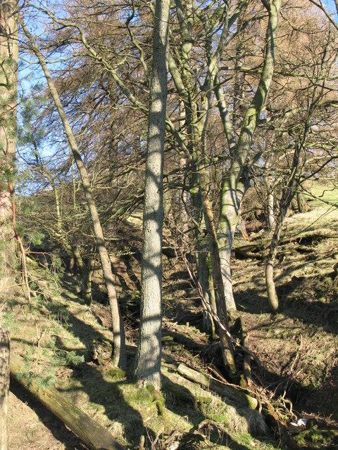 Cleugh of sike below Bates Hill (2)