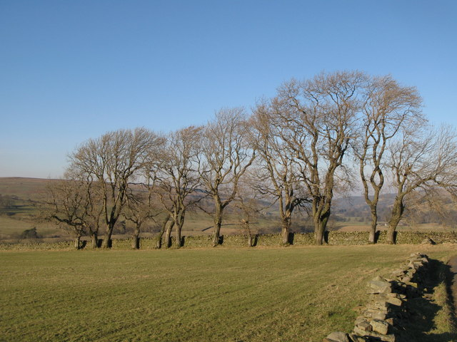 Pastures north of Hesleywell