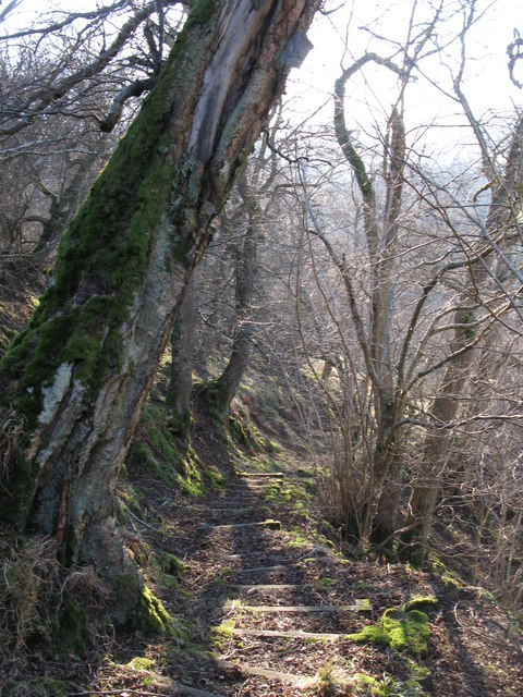 Path through the woods above Mohope Burn