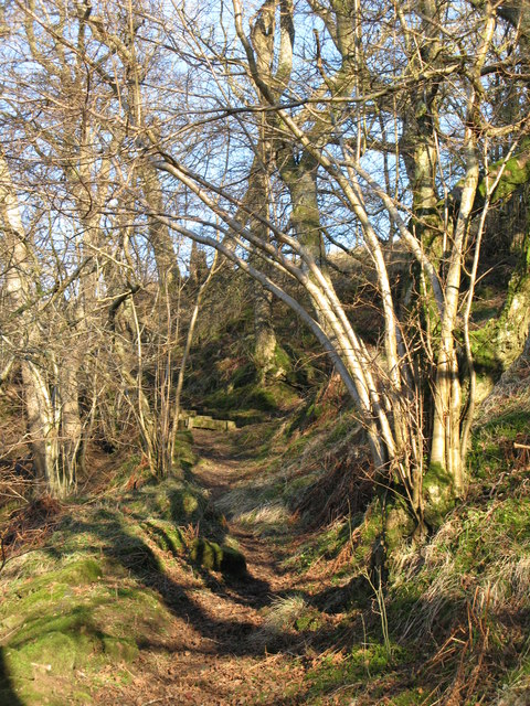 Path through the woods above Mohope Burn (2)