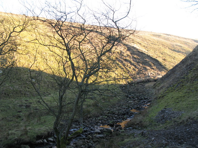The cleugh of Mohope Burn