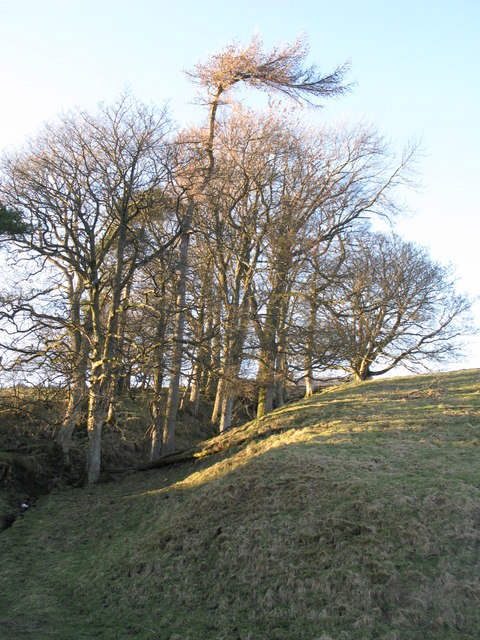 The cleugh of a tributary of Mohope Burn