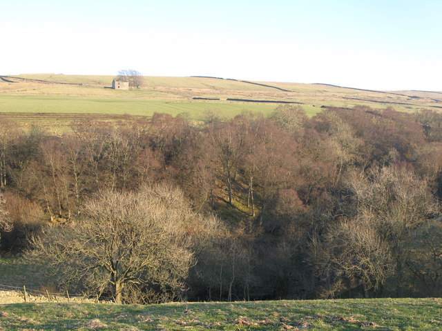 Pastures and woodland above Wellhope Burn