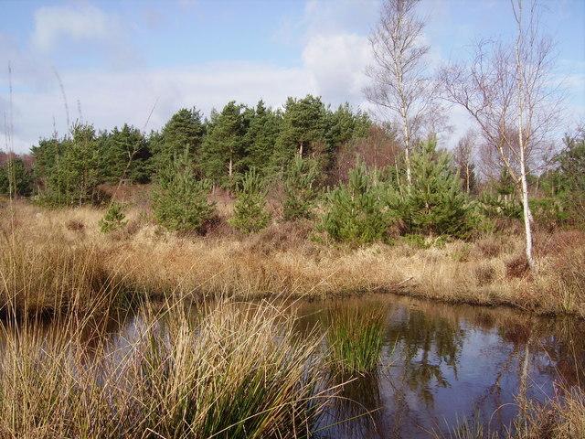 Marshland on Wildmoor Heath