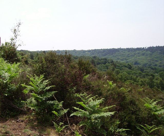 Hindhead Common at the Devil's Punchbowl