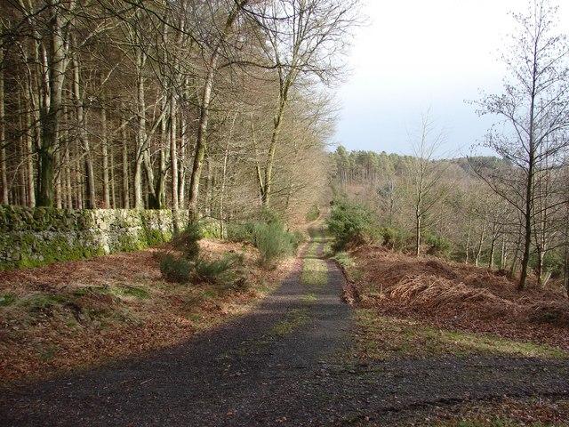 Dornell Wood: Kirk Road