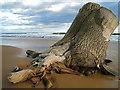 NK0226 : Stranded tree : Week 8