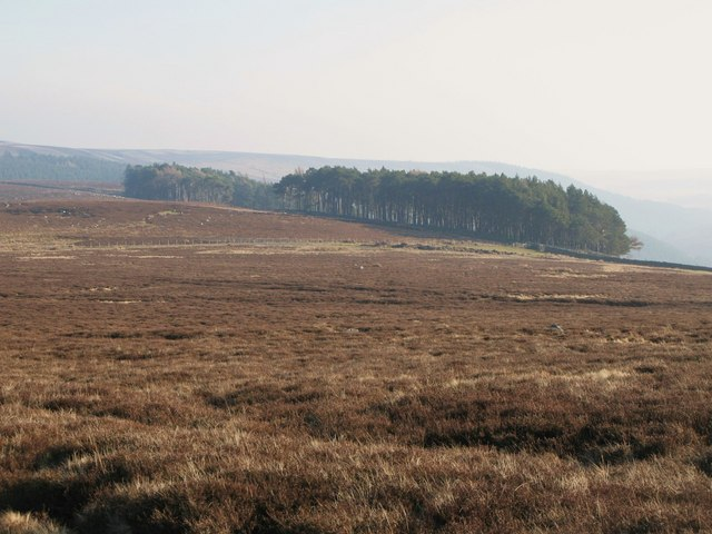 Moorland and plantation near Riddlehamhope