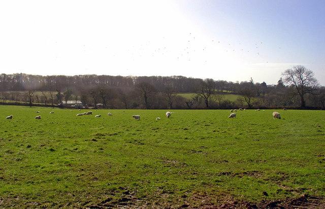 Barn, sheep, birds: Fairlawn, Walton East